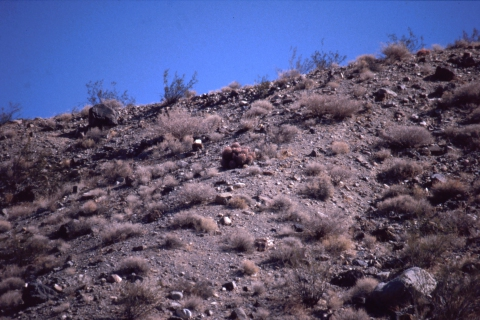 15 Death Valley