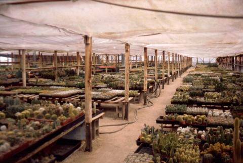 245 cactus nursery