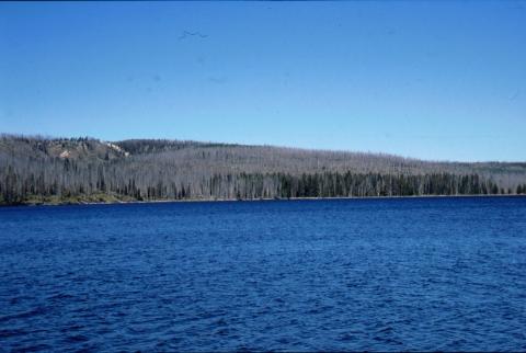 29 Lewis Lake