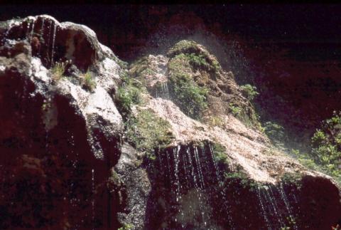 438 Weeping Rock