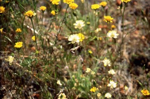 470 Wildflower