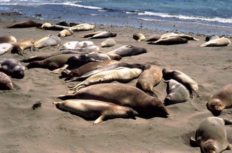 546 Als op het strand van Zandvoort