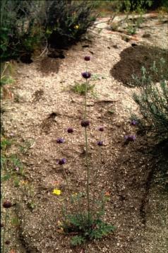 579 Wildflower