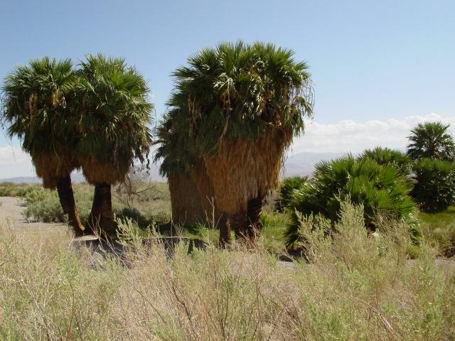 vakantie 2003 Lake Mead NRA2