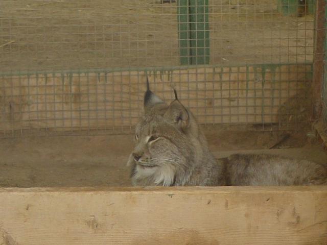 vakantie 2003 bobcat2